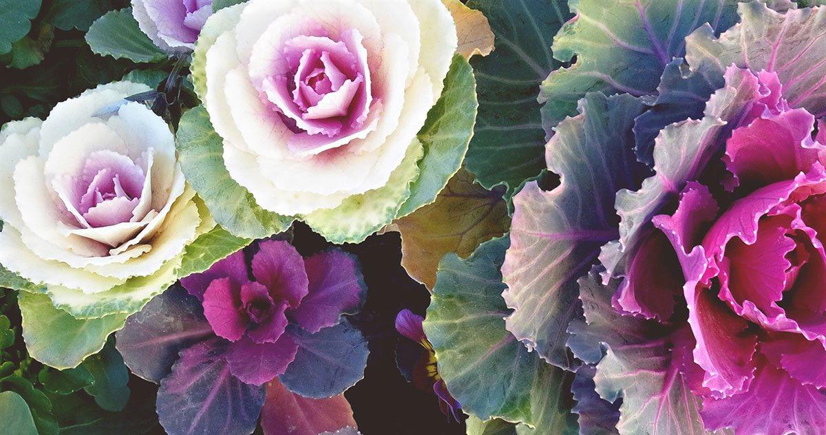 Winter Vegetables Gardening Guide