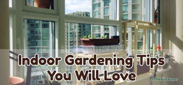 Indoor Gardening Tips You Will Love