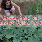 Growing Kale: The Easiest Garden Plant!