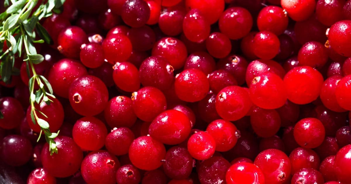 5 Ways To Succeed With A Cranberry Juice Detox