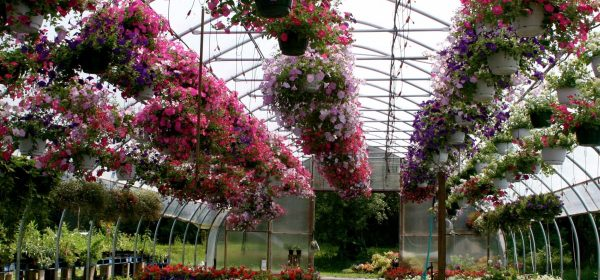 How Garden Center Can Help With Your Landscaping Project