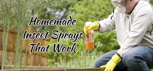 Homemade Insect Spray That Works