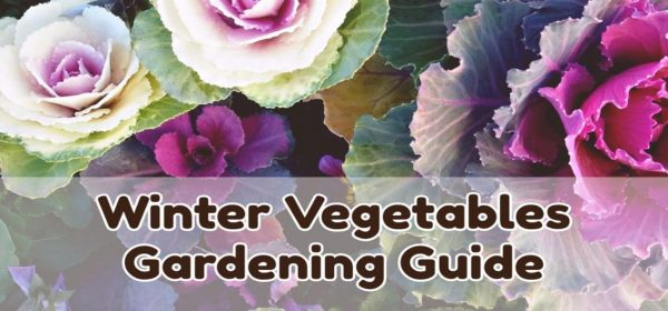 Winter Vegetables Gardening Guide