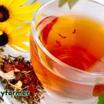 Herbal Tea Benefits The Body In So Many Ways
