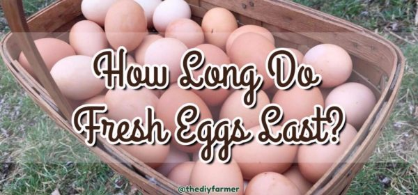 How Long Do Fresh Eggs Last? Find Out Here.