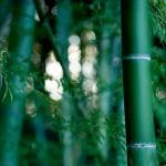 The Pros And Cons Of Having A Bamboo Garden