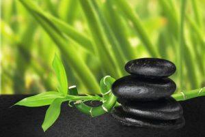 bamboo garden image